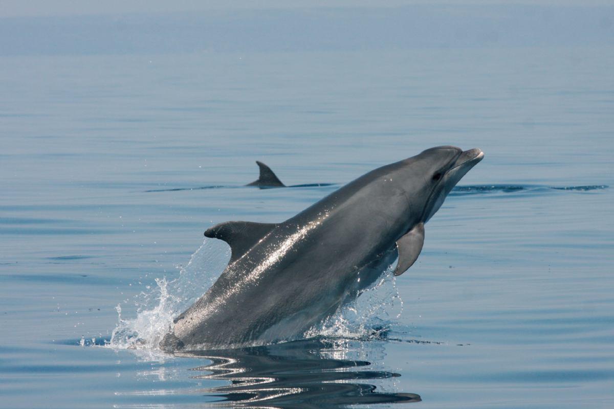 Hidrodinamika: Propulzija vodenih životinja