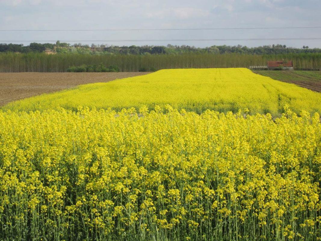 Hidrodinamika: Biodizel – zeleno gorivo