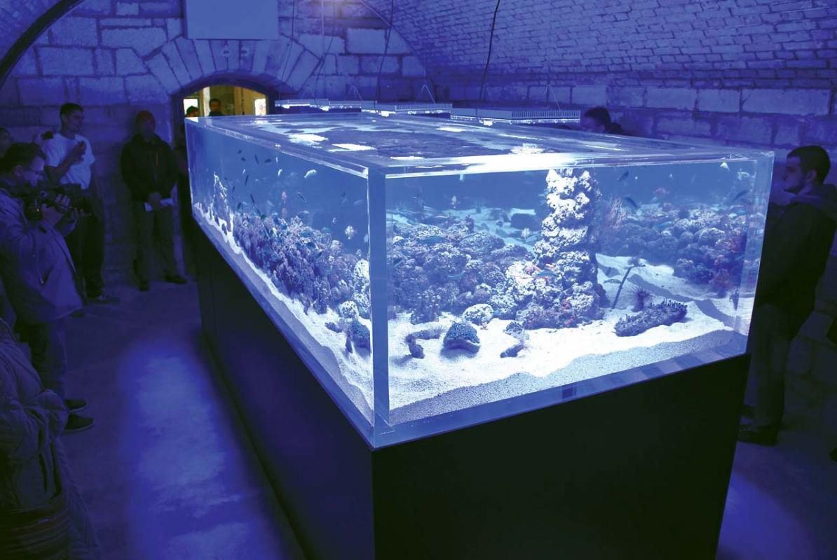 Aquarium - morska raskoš u Puli