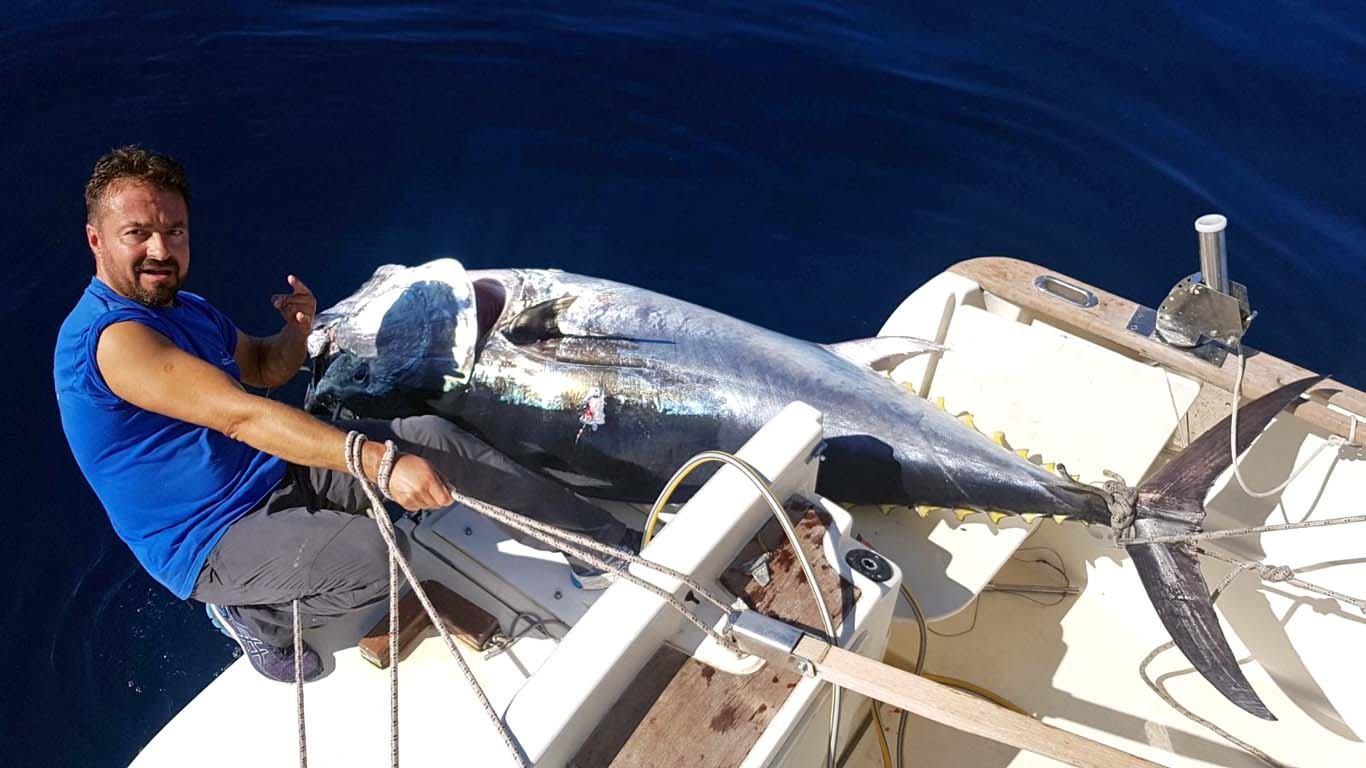 U Kvarneru ulovljena trofejna tuna od 201 kilogram!