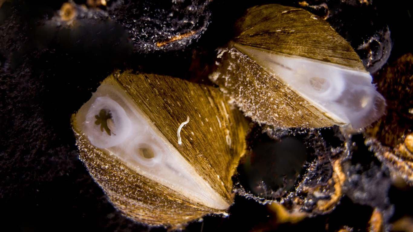 Pomognimo našoj školjki u izboru za mekušca godine!