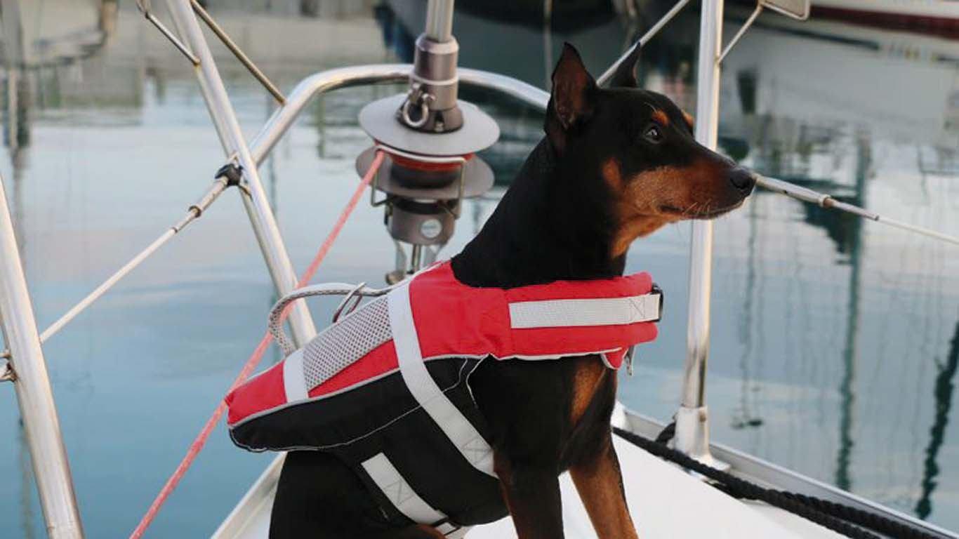 Vodite li kućne ljubimce na barku?