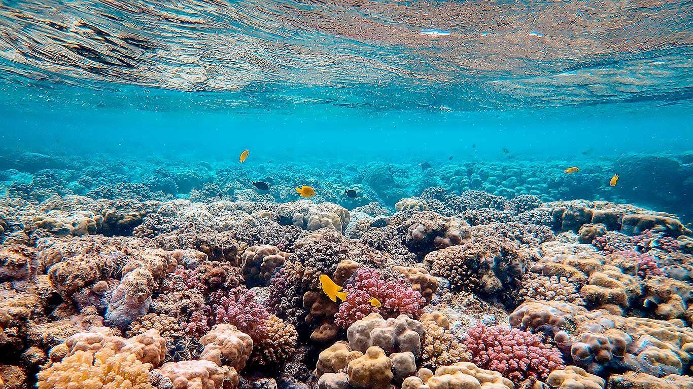 Umjetni podmorski grebeni