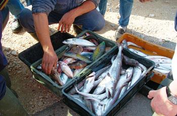 Rast ribarskih ulova