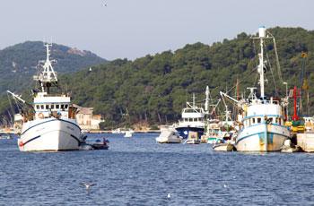 Zaštita morskih organizama